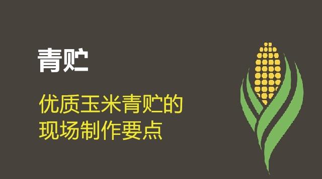 第04节 优质玉米青贮的现场制作要点-李威